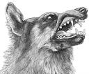 Snarling wolf.