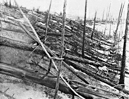 Tunguska event trees blasted down