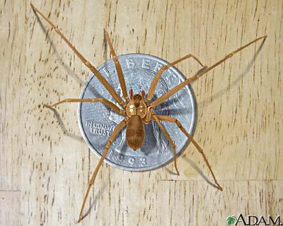 A dangerous spider
