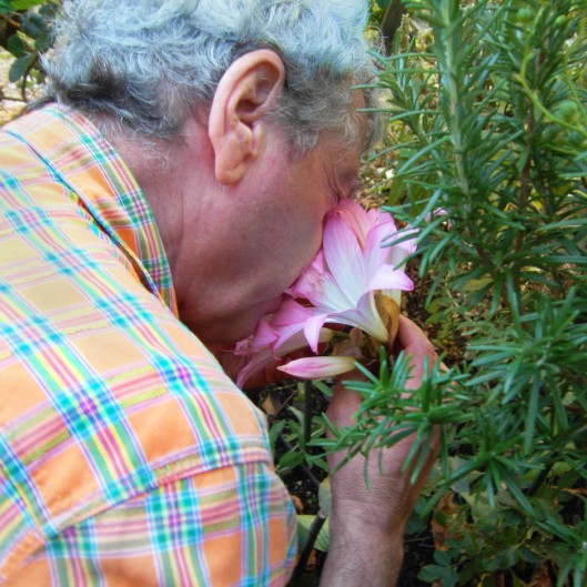 How to smell a flower.