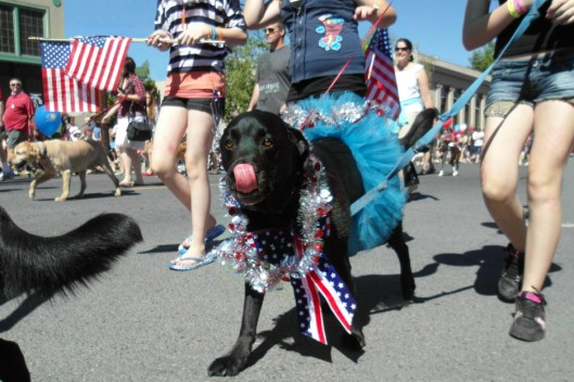 Bend Oregon dog with American flags