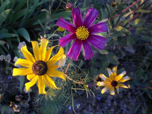Flowers in Bend, Oregon