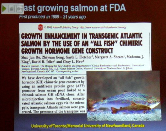 Steven_Strauss_biotech_salmon_growth
