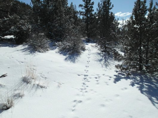 Pilot Butte Oregon in winter with rabbit tracks