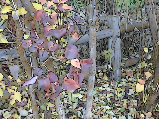 Purple fall leaves and a grey wooden fence.