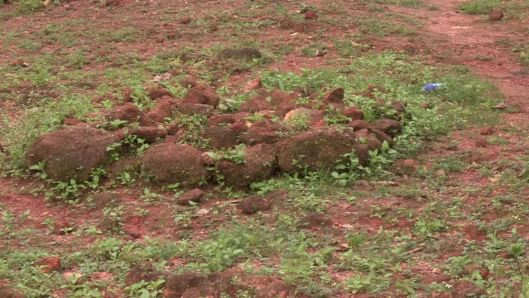 A photograph of the grave of  Ebola S1