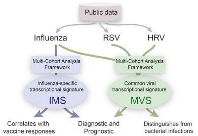 Identification of bacteria versus virius'