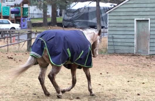 A photo of a horse with a broken leg.