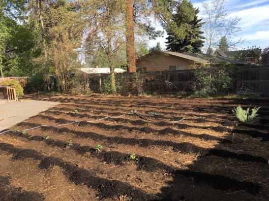 Garden all in IMG_9839